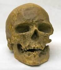 REPRODUCTION FOSSILE crane Cro Magnon Sapiens Skull fossil paleolithique replica