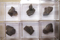 +++1 Stück: Staurolith xx // Gorob Mine, Erongo, Namibia +++ Mineralien Sammlung