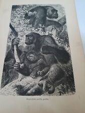 John Kinsley. 1884 Mammals. Troglodytes Gorilla. Antique Book Print. Bird.