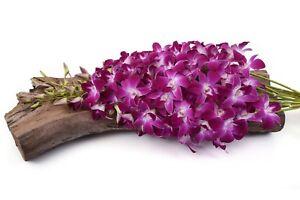 Fresh Cut Orchids - Premium Farm Direct Red Sonia Bom Dendrobium Orchids
