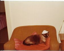 vtg color photo abstract siamese cat wearing coolie hat sits in chair