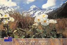 B66564 Mt Cook Giant Mountain Buttercup   new zealand