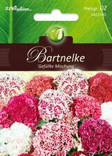 5421540 Bartnelken Gefüllte Mischung Dianthus barbatus   Nelke Nelken  Samen