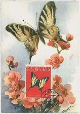 MAXIMUM CARD : intects BUTTERFLIES - Albania 1964 #1