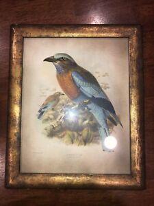 Vintage J. G. Keulemans Burmese Roller Bird Framed Lithograph Print