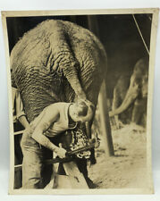 Vintage Glossy Photo PHOTOGRAPH 8X10 circus elephant foot cleaning tattoo carny