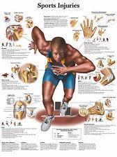 Cartel médico A3 – lesiones deportivas (libro de texto de anatomía Patología Médico Physio)