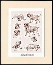 BORDER TERRIER DOGS IN VARIOUS MOODS CHARMING DOG PRINT MOUNTED READY TO FRAME