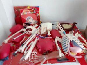 Costruisci il Corpo Umano RBA fabbri Corpo scheletro 3d vintage willy LEGGI