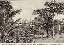 PORT LEON TOMBES TOMBS NOUVELLE GUINEE NEW GUINEA IMAGE 1893 PRINT
