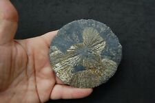 "Pyrite Sun Miners Dollar Southern Illinois 3 1/2"" Mineral Specimen fr Coal Mine"