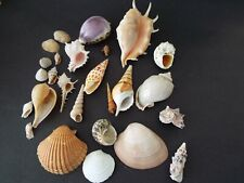 Seashell Collection From Worldwide. 26 pieces. Conch, Cowrie, Cone, More!