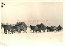 Foto, 2.WK. GebJg i./d. Wehrmacht: Militär-Pferde a./d. Vormarsch (MB)21355