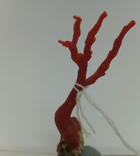 Natural Red Coral Branch 34 cts  Rough Minearls Specim Mediterranean Sea