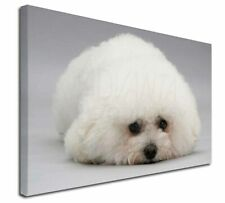 """Bichon Frise Dog 30""""x20"""" Wall Art Canvas, Extra Large Picture Prin, AD-BF1-C3020"""