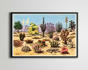 1953 Petley Desert Cacti POSTER! (up to 24 x 36) - Vintage Postcard - Southwest
