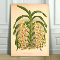 JEAN LINDEN - Beautiful Yellow & Pink Orchid #52 - CANVAS PRINT POSTER - 36x24""