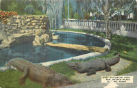 Linen Postcard Roadside Alligator Pool San Jacinto Plaza El Paso TX AH B876