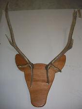 Rackheads Bull Elk antler mounting plaque kit, works w/ sheds. Deer & Moose avai