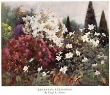"Original 1928 Antique Flower Print ""Japanese Anemones"" Vintage Botanical"