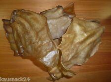 50 Stück RINDEROHREN ca. 1 Kg Kausnack Hundefutter Ochsenziemer Kauknochen BARF