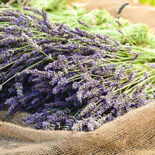 100 x French Natural Dried Lavender Flowers Bouquet Wedding Home Decor or Gift ~