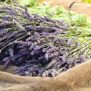 100Pcs Natural Lavender Dried Flowers Gifts Flower Bouquet Home Wedding Decor***