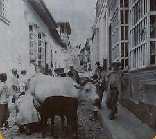Milking a Cow, Narrow Streets of La Guaira, Venezuela, Magic Lantern Glass Slide