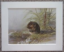 "Water Vole - Traditional Art Picture of British Wildlife, 8""x10"" Mounted Print"