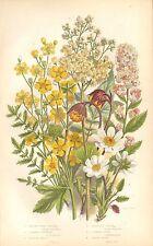 1860 Ca ANTIQUE BOTANICAL PRINT-ANNE PRATT- SPIREA, DROPWORT, AVENS
