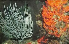 B56117 Fonds Marins Faune fauna