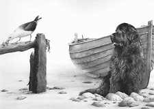 More details for mike sibley just thinking - newfoundlands newfies working dogs seagull art bay