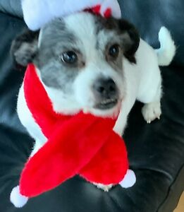 Christmas Scarf for Dogs Medium & Larger Sized - Red & White Scarves - 63cm