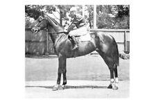 BIPLANE 1917 Victorian Derby winning racehorse modern Digital Photo Postcard