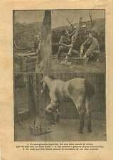 WWI Poilus Tranchée Arbalète Lance Grenades / Maréchal Ferrand 1915 ILLUSTRATION