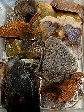 WHOLESALE Dinosaur Gem Bone Lapidary Rough Slabs LOT!! 1.3LBS., 14 Slabs!!!
