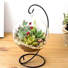 Hanging Glass Vase Flower Container Home Terrarium Planter Clear Plant Decor