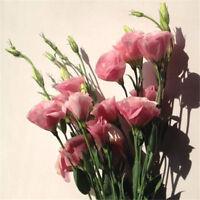 100PCs Lisianthus Seeds Collection Bonsai Lisianthus Flower Home Garden Plants