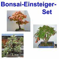 Starter Set für die Bonsai Zucht   i! Granat-Apfel / Amber-Baum / Efeu !i