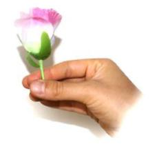 Endlose Blumenproduktion -  eine endlose Produktion von Rosen (03389)