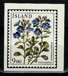 Photo Color Essay, Iceland Sc603 Flower, Veronica fruticans.