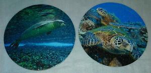 Puzzle A Round Jigsaw 140 Green Sea Turtle Hawaiian Monk Seal Ocean Animal