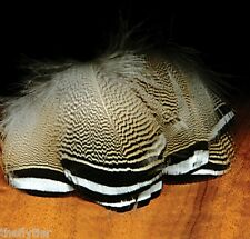 Woodduck BARRED White Black Feathers Fly Tying Duck Flank