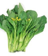 60 graines de BROCOLI CHINOIS (Brassica Albo.)H850 KAI-LAN CHINESE BROCCOLI SEED
