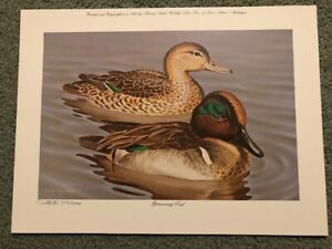 Greenwing Teal Duck By Harry Antis LE Print