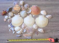 MIXED SEA SHELL LOT CLAM SHELL OYSTER SHELL MUSSEL SCALLOP #52
