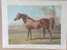 1876 Antique Chromo HORSE Print GOLDIE - High Class Arab - Sheldon Williams