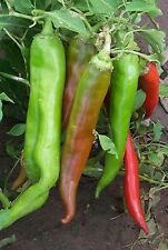 Chilli Seeds - Numex Big Jim - 20 Seeds