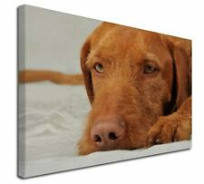 "Hungarian Vizsla Dog 30""x20"" Wall Art Canvas, Extra Large Picture P, AD-V3-C3020"