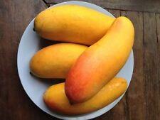 5 seeds Rainbow mango Mango Seed Mahachanok Mango Thai very sweet